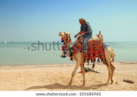 Egyptian man on his camel at Red Sea