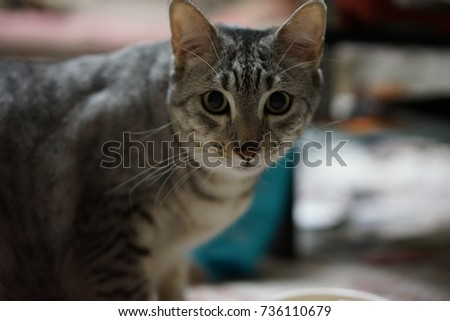 https://thumb1.shutterstock.com/display_pic_with_logo/167494286/736110679/stock-photo-egyptian-mau-736110679.jpg
