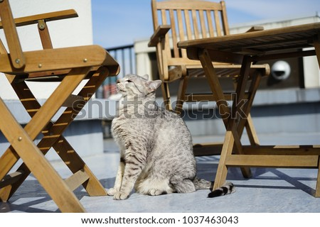 https://thumb1.shutterstock.com/display_pic_with_logo/167494286/1037463043/stock-photo-egyptian-mau-in-a-rooftop-1037463043.jpg