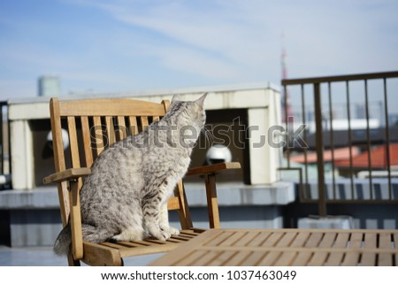 https://thumb1.shutterstock.com/display_pic_with_logo/167494286/1037463049/stock-photo-egyptian-mau-in-a-rooftop-1037463049.jpg