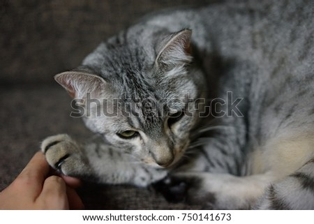 https://thumb1.shutterstock.com/display_pic_with_logo/167494286/750141673/stock-photo-egyptian-mau-in-a-room-750141673.jpg