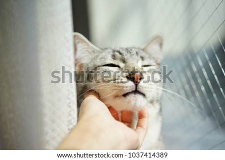 https://thumb1.shutterstock.com/display_pic_with_logo/167494286/1037414389/stock-photo-egyptian-mau-in-rooftop-1037414389.jpg