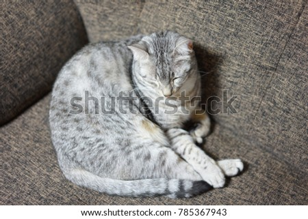 https://thumb1.shutterstock.com/display_pic_with_logo/167494286/785367943/stock-photo-egyptian-mau-in-the-room-785367943.jpg