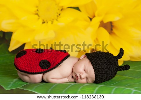 Eight day old newborn girl wearing a black and red crocheted ladybug costume and sleeping on the leaf of a yellow flower - stock photo