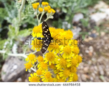 Elba, Italy: flowers with a butterfly a botanical garden