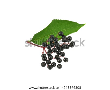 Elderberries with leaf - stock photo