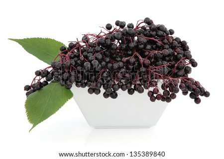 Elderberry fruit in a porcelain dish with leaf sprigs over white background. - stock photo