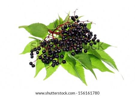 Elderberry fruit on a white background - stock photo