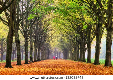 Elderly couple walking in the forest in autumn in het Amsterdamse bos (Amsterdam wood) in the Netherlands. HDR - stock photo