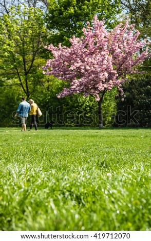 Elderly couple walking under blooming cherry tree in public gardens - stock photo
