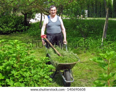 Elderly farmer with fork collect grass in wheelbarrow
