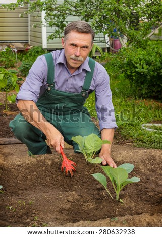 Elderly gardener produces care for cabbage seedlings - stock photo