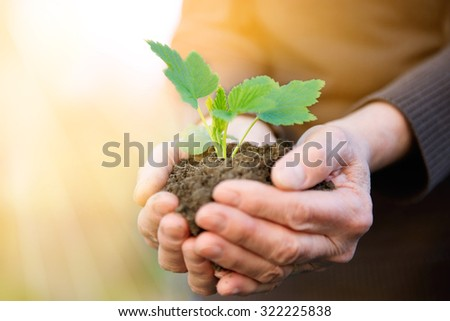 Elderly hands protecting new life in plant shape. - stock photo