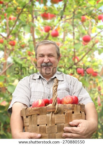 Elderly man, harvesting a apple in garden - stock photo