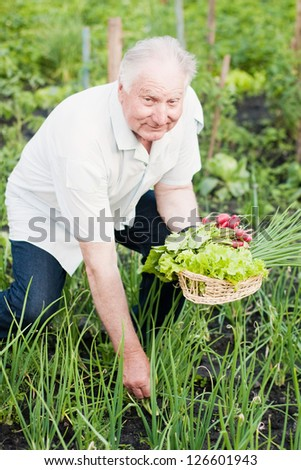 elderly men in garden