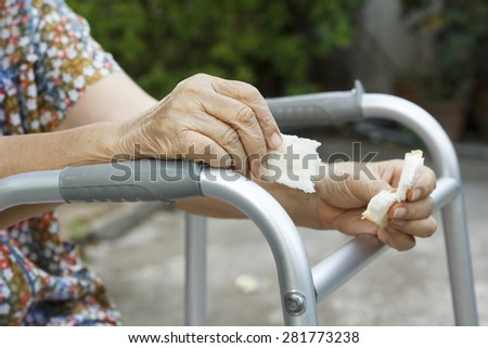 elderly woman holding a slice of bread for dogs - stock photo