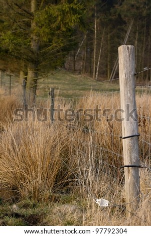 Electric fence with long withered grass and trees in the background