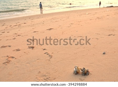 Electrical bulb was throw away on the sea until ship worms alive was sweep away by wave and tide to the shore - stock photo