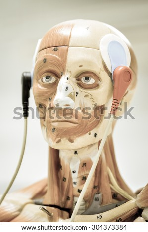 electromyography model with old color style - stock photo