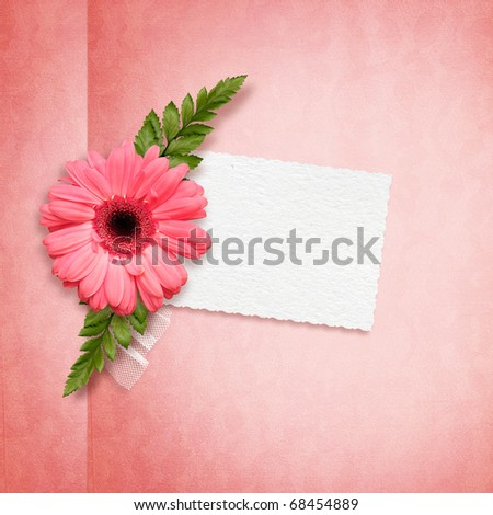 Elegance card with pink herbera - stock photo