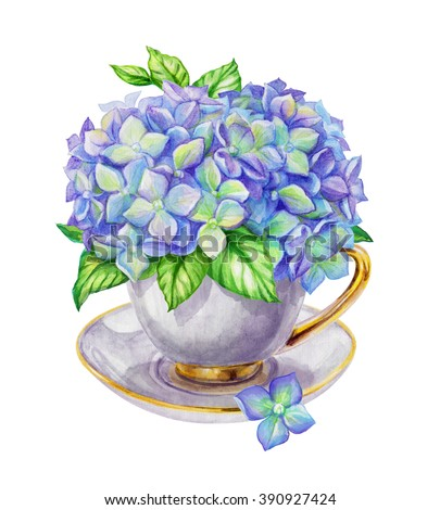 elegant bunch of flowers, hydrangea in the tea cup, watercolor shabby chic illustration isolated on white background - stock photo