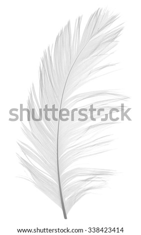 Elegant feather on white background - stock photo