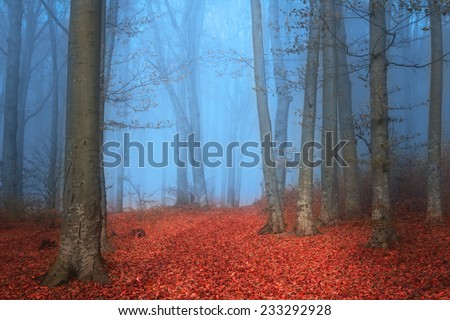 Elegant forest with blue mist and red leaves during autumn - stock photo