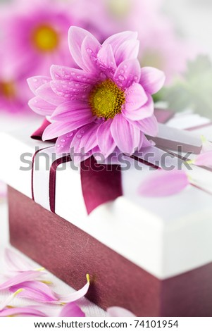 Elegant gift box with daisy flower - stock photo