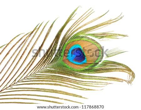 Elegant peacock feather on white background - stock photo