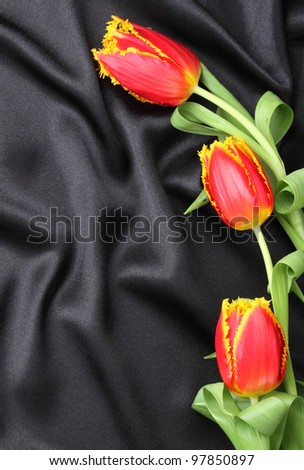 elegant tulips on black background
