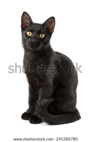elegant young black cat shot over white background - stock photo