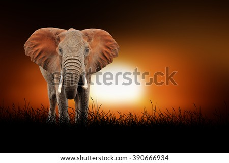 Elephant against on the background of african sunset - stock photo