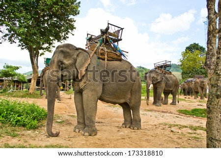 Elephant and attractions in elephant camps