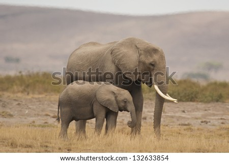 Elephant and its calf in a kenyan national park