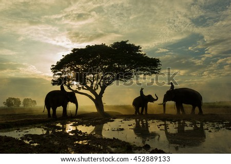 Elephant and mahout gther under big tree in the sunrise