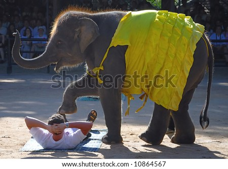 Elephant and person - stock photo