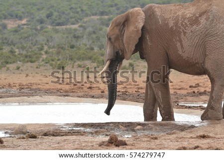 Elephant at the waterhole