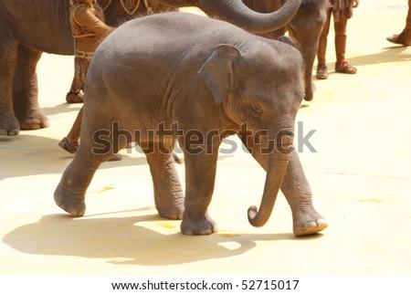 elephant baby - stock photo