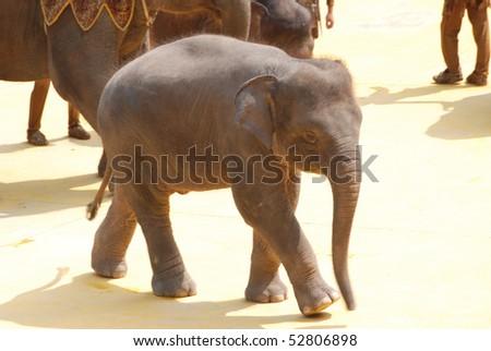 elephant baby walking on ground - stock photo