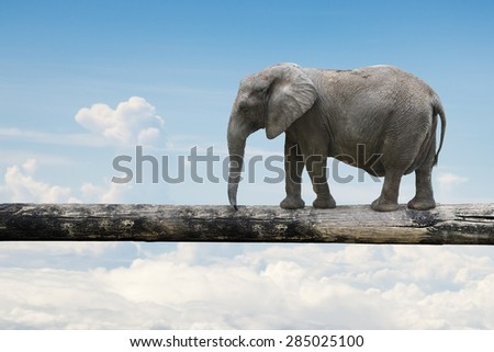 Elephant balancing on tree trunk, with nature sky background.