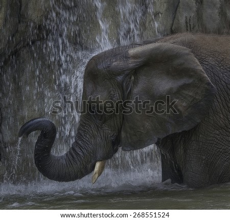 Elephant Bathing Under a Waterfall - stock photo