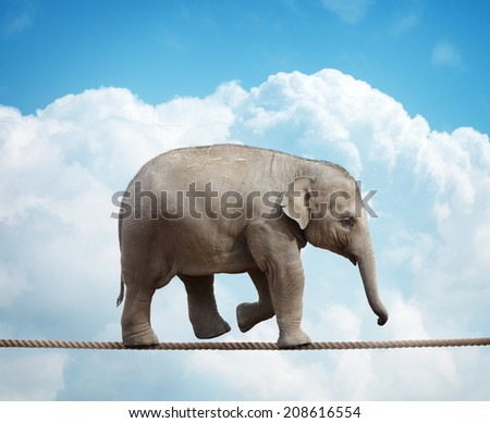 Elephant calf balancing on a tightrope concept for risk, conquering adversity and achievement - stock photo