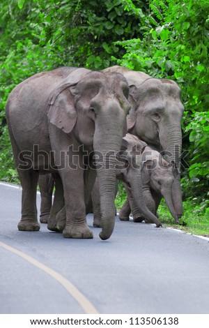 Elephant charge - stock photo
