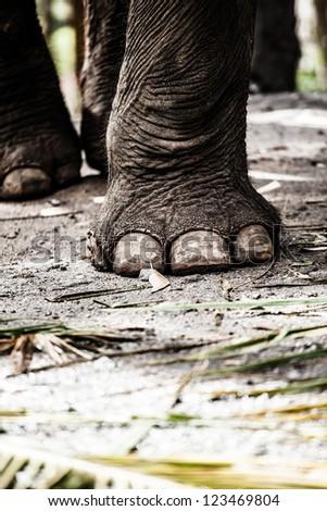 Elephant close up ( HDR image ) - stock photo
