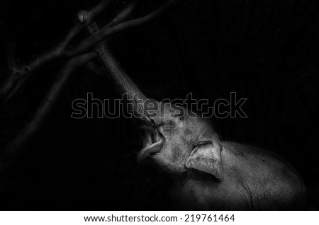 Elephant eating - reach to the tree in dark night forest background - stock photo