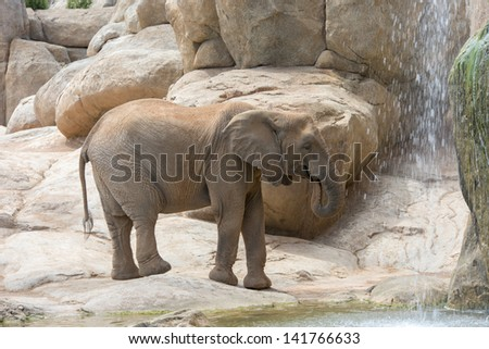 Elephant (elephants) in a natural park. (Spain, Valencia)