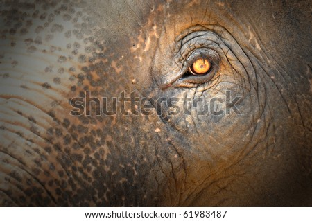 elephant eye - stock photo