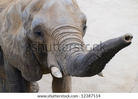 Elephant eye and trunk closeup - stock photo