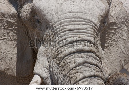 Elephant face covered by white lime - stock photo