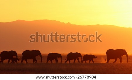 Elephant family at sunset